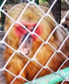 В Сплитском зоопарке