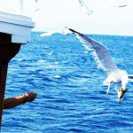 фиш-пикник, чайка, море