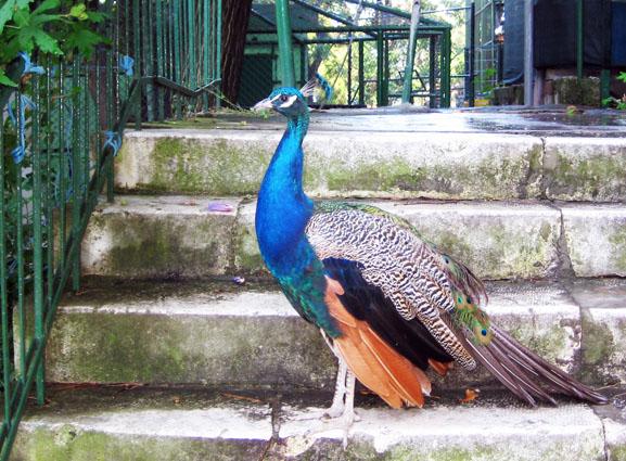 Зоопарк, домашние животные, Сплит, Хорватия