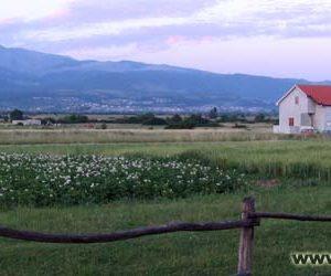 Синь, кони, Хорватия, конные туры, прокат, жилье, база, конно-спортивная, отдых