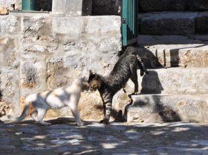 кошки, Хорватия, Колочеп