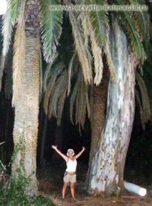 Хорватские, джунгли, пальмы