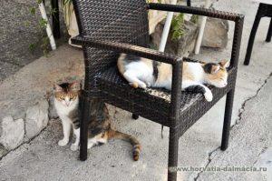кошки, остров, Шипан